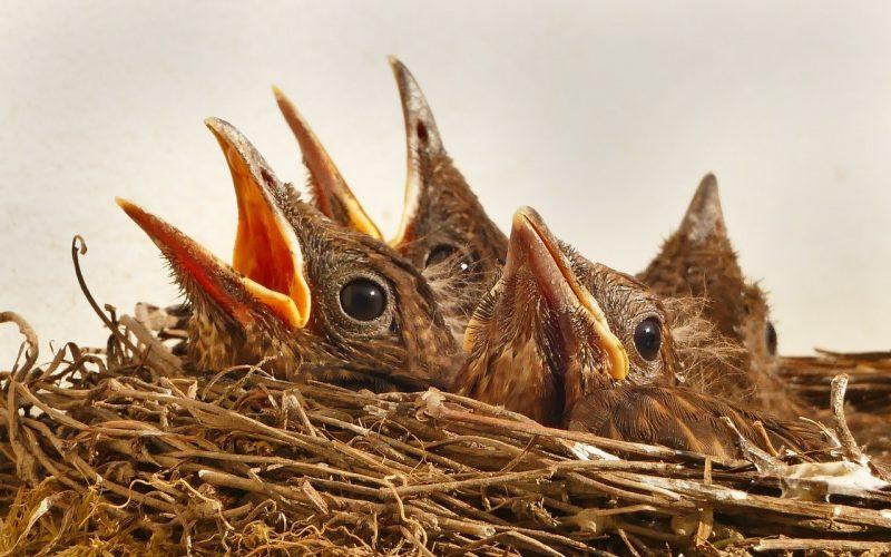 safety as birds nesting