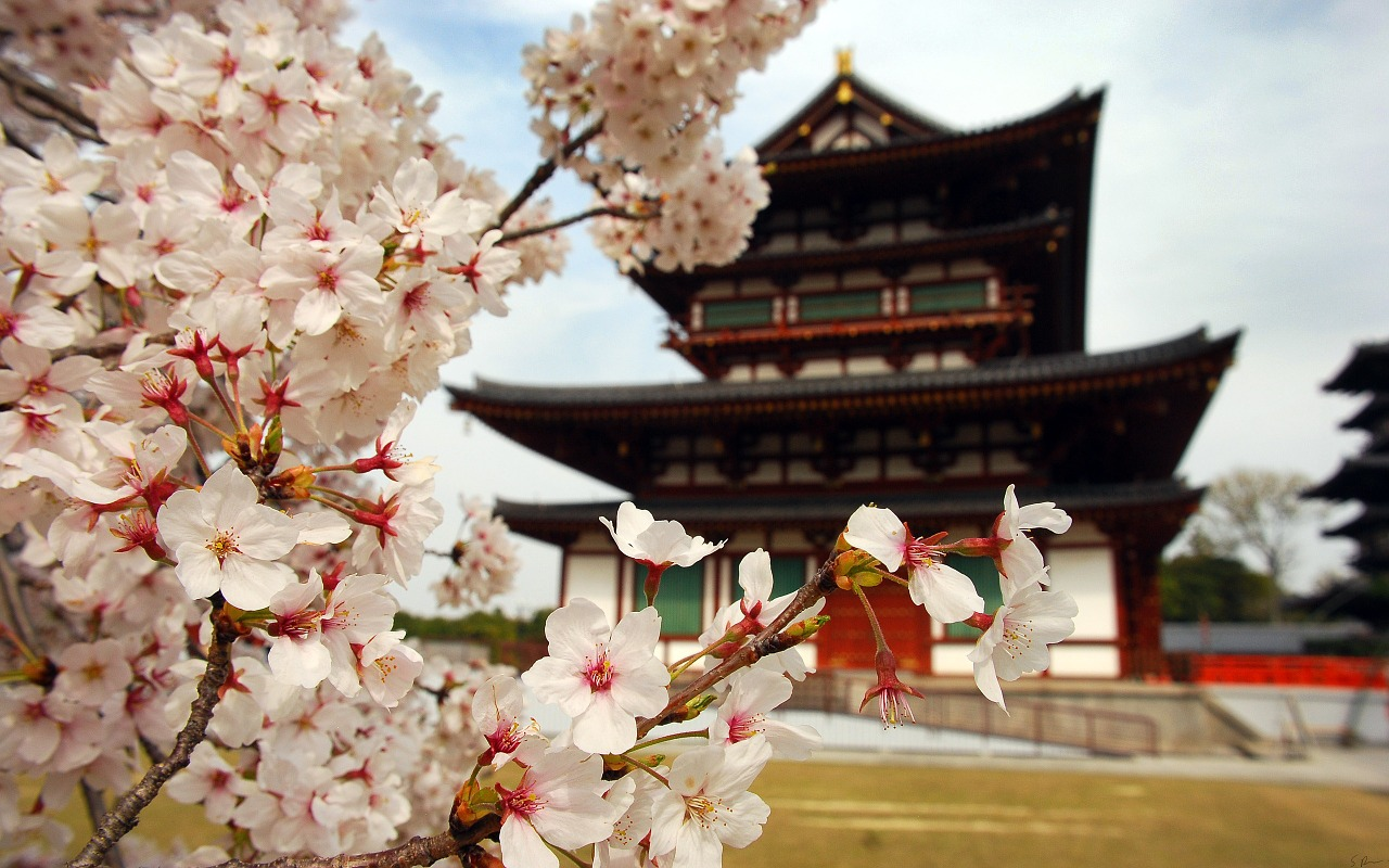 Cherry blossom near a Japanese Pagoda