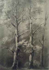 three trees in a wood de boissieu