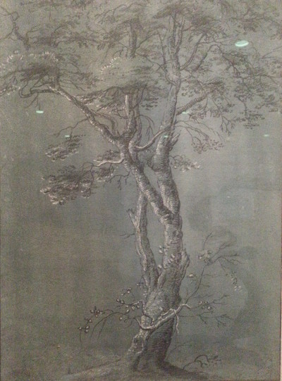 van uden study of a birch